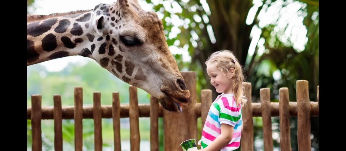 Zoo-Belgique-2
